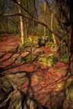 Forest Floor Scene Imagen de archivo libre de regalías