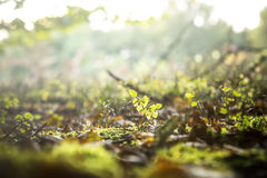 Forest floor soil vegetation Royalty Free Stock Photos