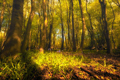 Forest Floor In Spring Stock Photos