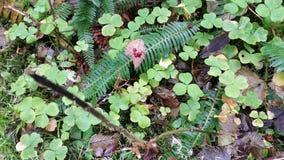 Forest Floor Still Life bonito Foto de Stock