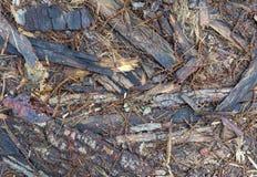 Forest Floor Texture Fotografía de archivo libre de regalías