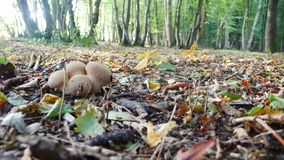 Forest floor toadstools stock image