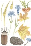 Forest flora and fauna water color illustration set. Animals and plants. Hand drawn watercolor illustration forest flora and fauna set. Animals and plants on stock illustration