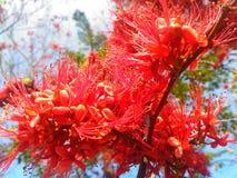 Forest Flower stock afbeeldingen