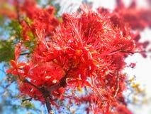 Forest Flower stock fotografie