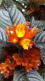 Forest Flower Imágenes de archivo libres de regalías