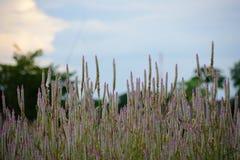 Forest Flower Stockbilder