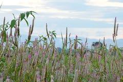 Forest Flower Foto de archivo libre de regalías