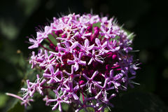 Forest flower Stock Photos