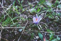 Forest Flower Closeup salvaje Foto de archivo libre de regalías