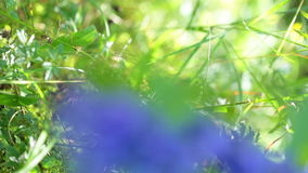 Forest flower. Closeup stock video footage