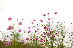 Forest of Flowers Stock Images