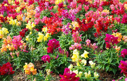 Forest of Flowers Royalty Free Stock Images