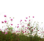 Forest of Flowers Royalty Free Stock Photos