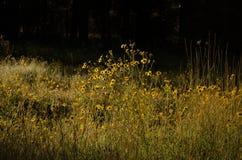Forest Flowers amarillo Fotos de archivo libres de regalías