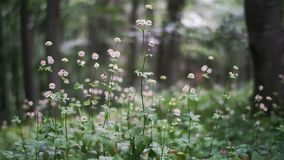 Forest flowers. Panning shot of tall gentle forest flowers with shallow depth of field stock video footage