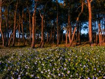 Forest with flowers at spring in La Galea. In Getxo royalty free stock photos