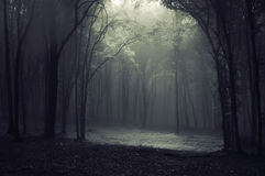 Free Forest Fog Royalty Free Stock Image - 10524476