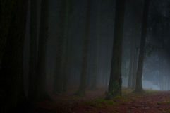 Free Forest Fog Stock Photo - 17386510