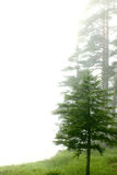 Forest in the fog Royalty Free Stock Image
