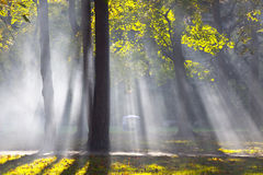 Forest fog. Photo of the forest fog Royalty Free Stock Images