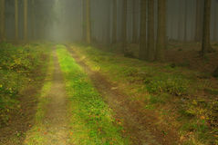 Forest in fog 22 Stock Photography