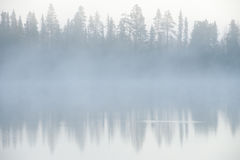Forest and fog Royalty Free Stock Photography