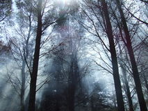 Forest fog Stock Images