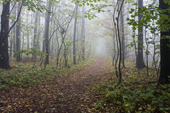 Forest with fog Stock Image
