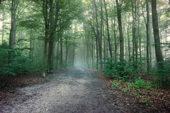 Forest fog Royalty Free Stock Photography