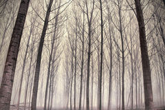 Forest in the fog Royalty Free Stock Photos