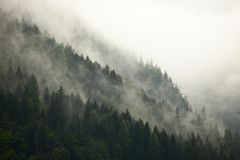 Forest Fog fotografia stock