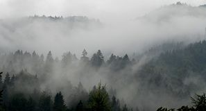 Forest in fog. Shoot early in the morning by foggy weather Stock Photos