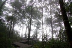 Forest&Fog 免版税库存图片