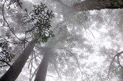 Forest Fog Royaltyfri Foto