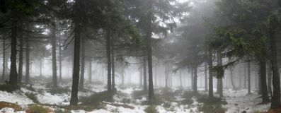 Forest in the fog. Winter fog in the forest Stock Photo