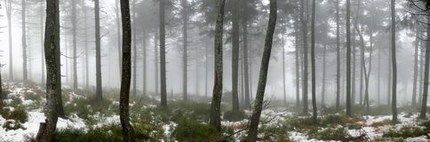 Forest in the fog. Winter forest in the fog Stock Photo
