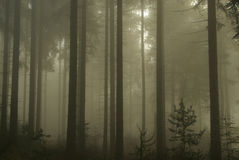 Forest in fog Stock Images
