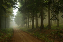 Forest in fog. Deep forest in fog and hiking trail Royalty Free Stock Photography
