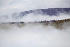 Forest Fog Stock Afbeeldingen