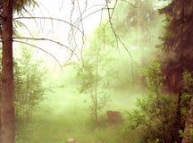 Forest Fog Fotografering för Bildbyråer