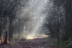 Forest in the fog Stock Photos