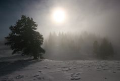 Forest in fog. Forest in winter surronuded with fog Stock Photos