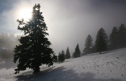 Forest in fog. Forest in winter surronuded with fog Stock Photography