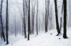 Forest fog. A forest in the fog Royalty Free Stock Images