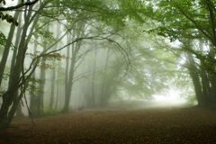 Forest in fog Stock Image