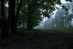 Forest in the fog Royalty Free Stock Images