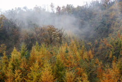 Forest with fog in autumn Royalty Free Stock Photo