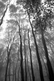Forest with fog at autumn Royalty Free Stock Images