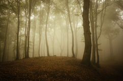Forest with fog in autumn on Halloween Stock Photo